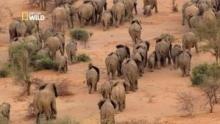 La migration des éléphants Voir la fiche programme