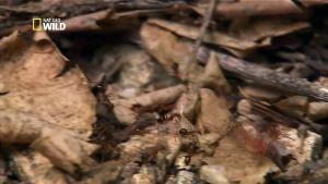 Des millions de bébés crabes photo