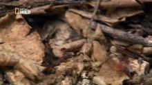 Des millions de bébés crabes Voir la fiche programme