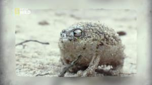 Une grenouille incroyable photo