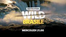 Destination Wild: ogni mercoledì alle 21:00 su Nat Geo Wild programma