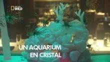 Un aquarium unique Voir la fiche programme