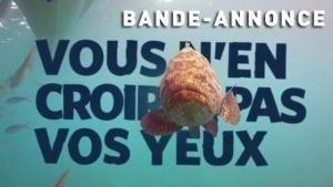 Les rois des aquariums | Bande-Annonce photo