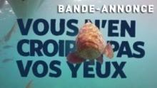 Les rois des aquariums | Bande-Annonce Voir la fiche programme