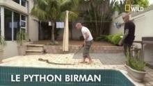 Le python Birman Voir la fiche programme