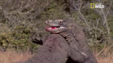 Les dragons de Komodo Voir la fiche programme