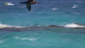 Il predatore delle Hawaii foto