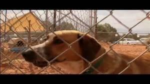 Dogtown – Das Hundeasyl: Problemhunde (2 Minuten) Foto