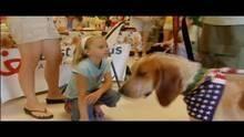 Dogtown – Das Hundeasyl: Problemhunde 8 Programm