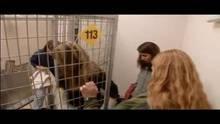 Dogtown – Das Hundeasyl: Problemhunde 2 Programm