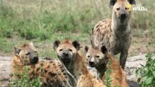 Istinti animali - Leader al comando programma