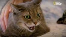 Le langage des chats Voir la fiche programme