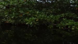 Residential Crocs photo