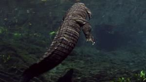 The Swamp's Apex Predator photo