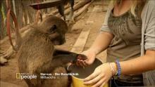 Harnas - Die Buschklinik Programm
