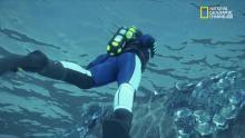 Giù nell'oceano programma