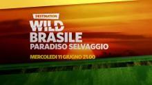 Brasile paradiso selvaggio - Da mercoledì 11 giugno alle 21.00 programma