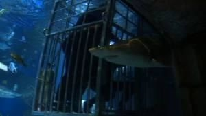 Das Haifischbecken Foto