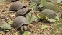 Galápagos-szigetek film