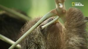 Brasile paradiso selvaggio - Amazzonia: i segreti della Foresta foto