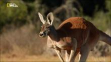 Wild Australia - Un deserto per i canguri programma