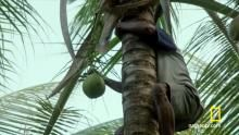 Coconut Hunting show