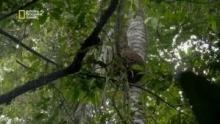 Se procurer du miel dans la forêt amazonienne Voir la fiche programme