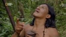 La chasse au singe-araignée chez les Huaorani Voir la fiche programme