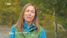 Die Yukon-Tierärztin Programm