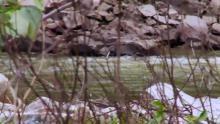 Alaska'da Hayatta Kalmak  - Öfkeli Nehir - EP 5 Season 2