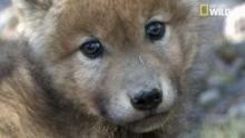 L'enfance d'un loup Voir la fiche programme