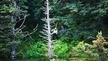 Przetrwać na Alasce - Przetrwać na Alasce: W mrocznym, gęstym lesie - EP 7 Season 2