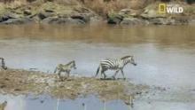 Les dangers de la rivière Talek Voir la fiche programme
