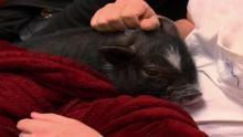 Schweinische Sachen Programm