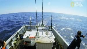 Lupi di Mare - Sfida all'ultimo tonno foto