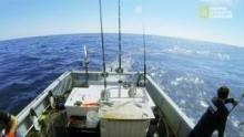 Lupi di Mare - Sfida all'ultimo tonno programma