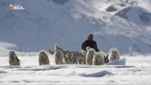 Buone Feste dagli animali di Wild Canada foto
