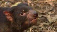 Animali mortali: Australia - Un morso potentissimo programma