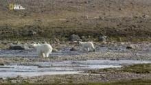 Wild Canada - Terre di ghiaccio programma