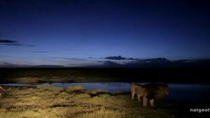Ferocious Female Lions photo