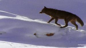 Machtige jagerskudde Foto