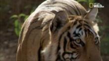 La leggenda delle tigri sorelle - Star e Sondali programma