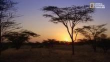 Turkana: il microcosmo quasi privo di fauna programma