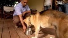 Les conduites agressives liées à la nourriture chez les chiens Voir la fiche programme