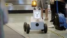 Ce chien robot met de l'ordre dans les aéroports Voir la fiche programme