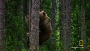 Baby Bear Tree Huggers video