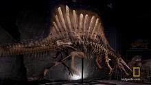 Aquatic Dinosaur show