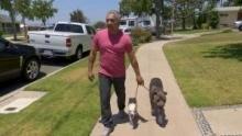 Notruf Hund - Einsatz für Cesar: Trailer Programm