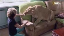 Il mio animale domestico: la leonessa programma