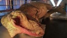 T. rex Otopsisi Tanıtımı SAYFAYA GİT